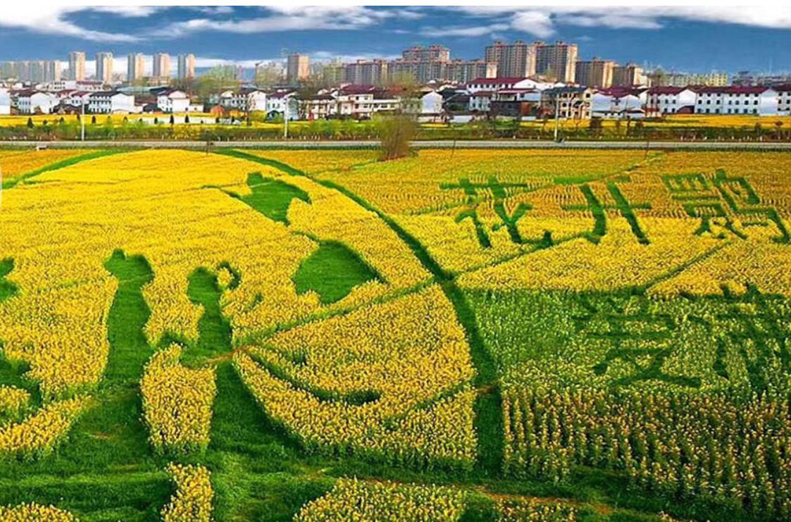 带她去看浪漫的稻田画