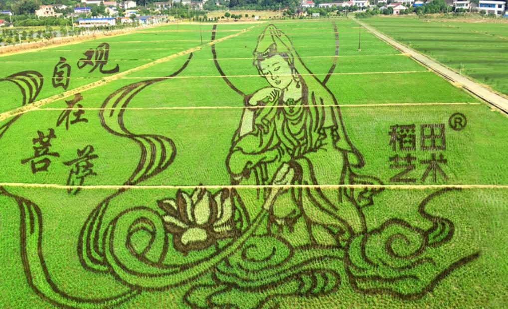 稻田艺术保丰收