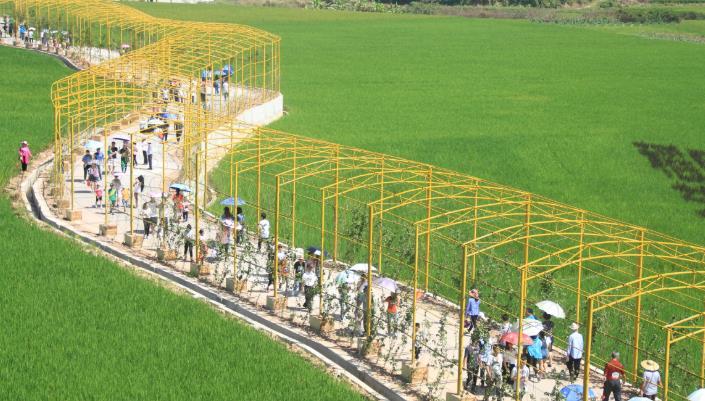 首届农民丰收节在宾阳县顺利开展