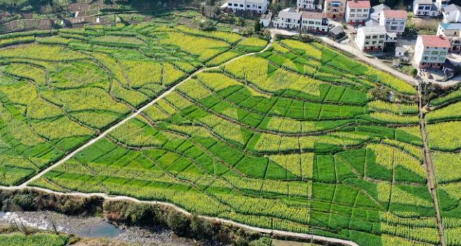 生活在稻田周边的人们是辛劳的,但也是幸福的